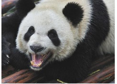 你的網站是被Google熊貓揮了一拳?還