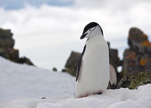 【Google演算法時光機】: 企鵝演算法更新(Google Penguin Update)