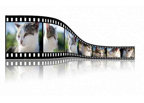 5步驟創建吸引眼球的影片行銷策略